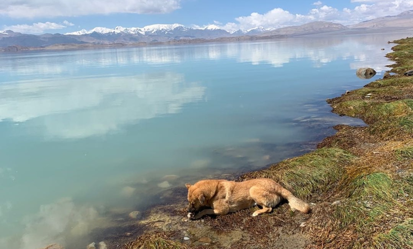 Large high pamirs black lake